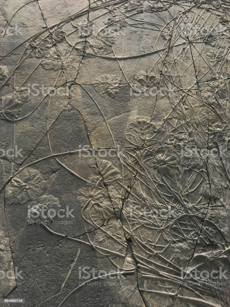 background with fossilized leaves in cream-colored limestone stock photo