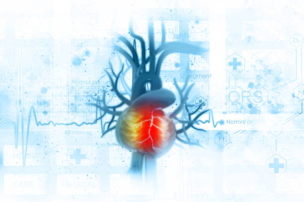ECG background with human heart stock photo