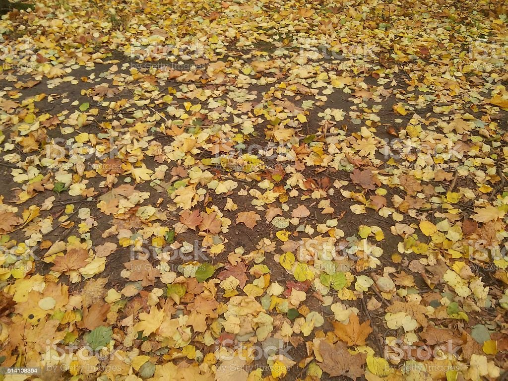 Background with leaves stock photo