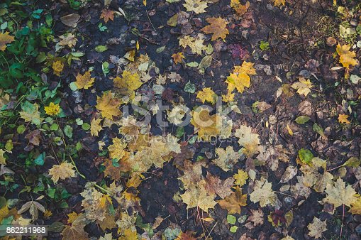 istock Background with maple autumn leaves in autumn park. 862211968
