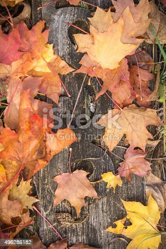 istock Background with maple leaves 496286182
