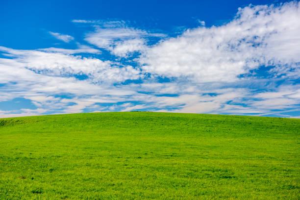 Hintergrund mit Wiese, Himmel und Kopierraum – Foto