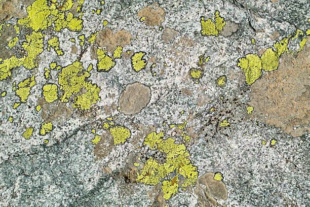 Hintergrund mit mossy stone Oberfläche – Foto