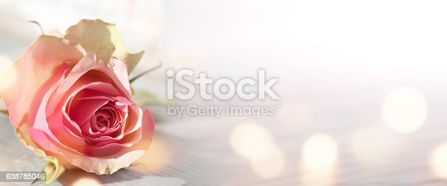638784780 istock photo Background with pink rose 638785046