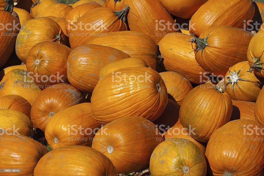 Background with pumpkins royalty-free stock photo