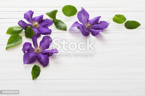 istock background with purple clematis 846668008