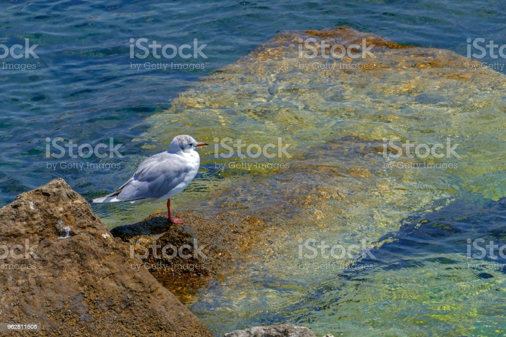 Background with Seagull on water - Foto stock royalty-free di Ala di animale