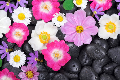 istock Background with stones and flowers 518979201