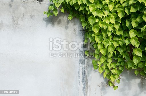 istock background with tree branches, Green leaf and background concept, 636643382