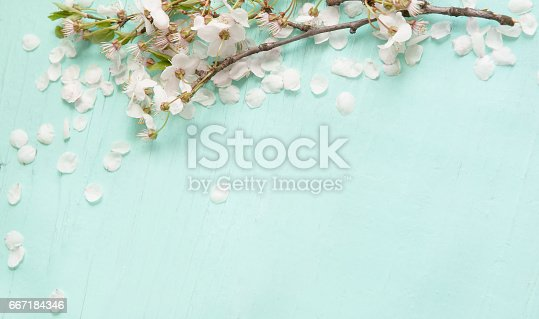 istock Background With white cherry blossoms 667184346