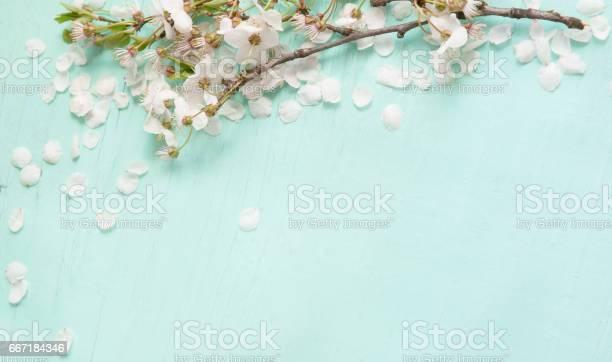 Background with white cherry blossoms picture id667184346?b=1&k=6&m=667184346&s=612x612&h=igrfkrrg2curmpunglancptzmzmtkbpfoysypccyjcg=