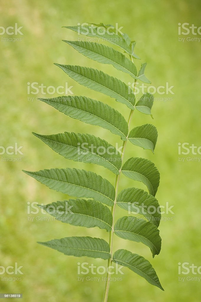 Background,leaves royalty-free stock photo