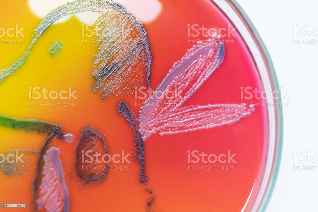 Backgrounds Artistic of Lactobacillus bulgaricus from laboratory microbiology. stock photo