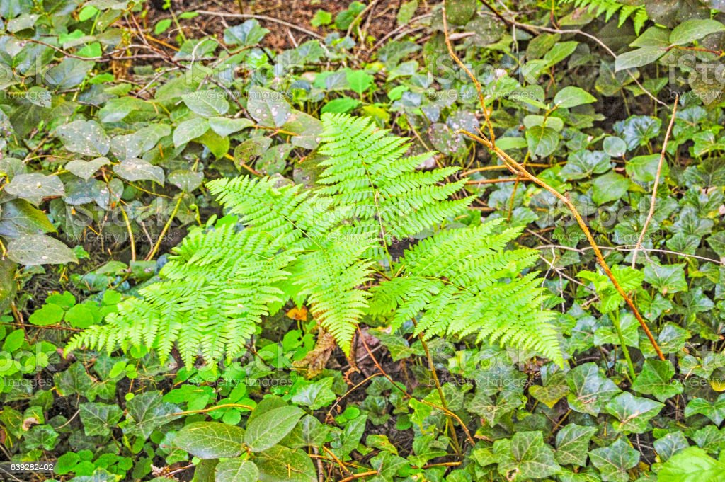 Backgrounds - Fern - Leaves stock photo