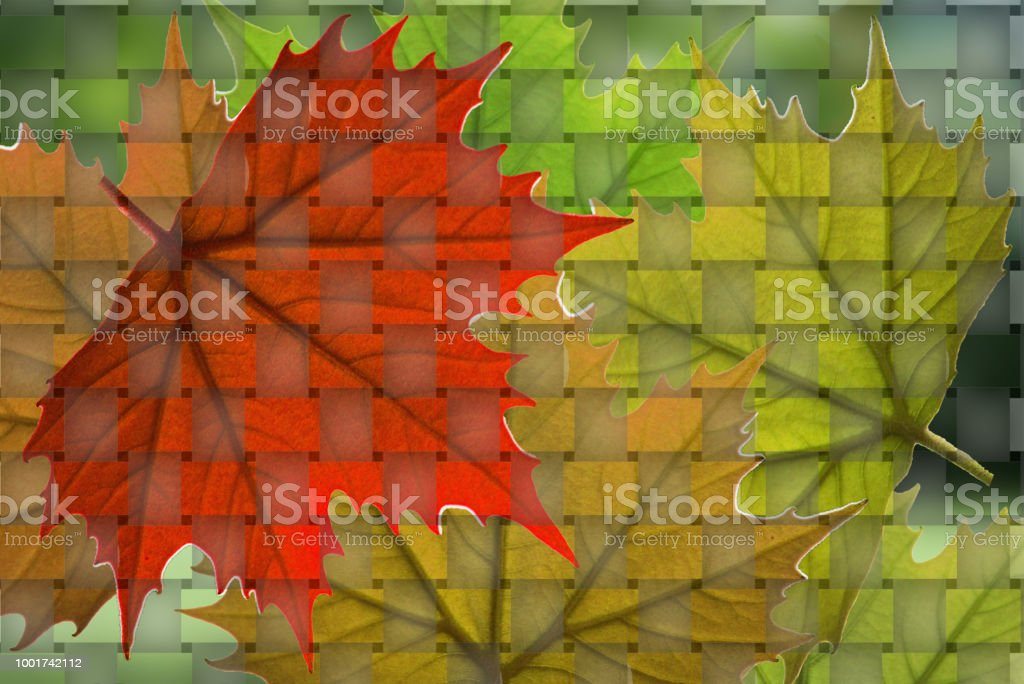Backgrounds leafs green, red,yellow stock photo