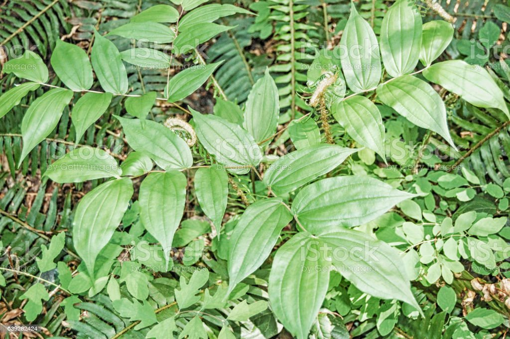 Backgrounds - Leaves stock photo