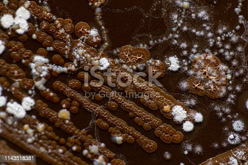 istock Backgrounds of Characteristics and Different shaped Colony of Bacteria and Mold growing on agar plates from Soil samples for education in Microbiology laboratory. 1143518381