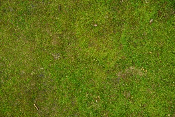 backgrounds/textures - moss stock pictures, royalty-free photos & images
