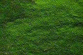 istock Backgrounds/Textures 1093232170