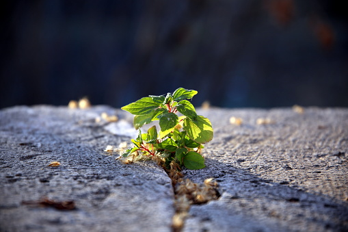 Backlight on green wild seedling growing in stone fracture