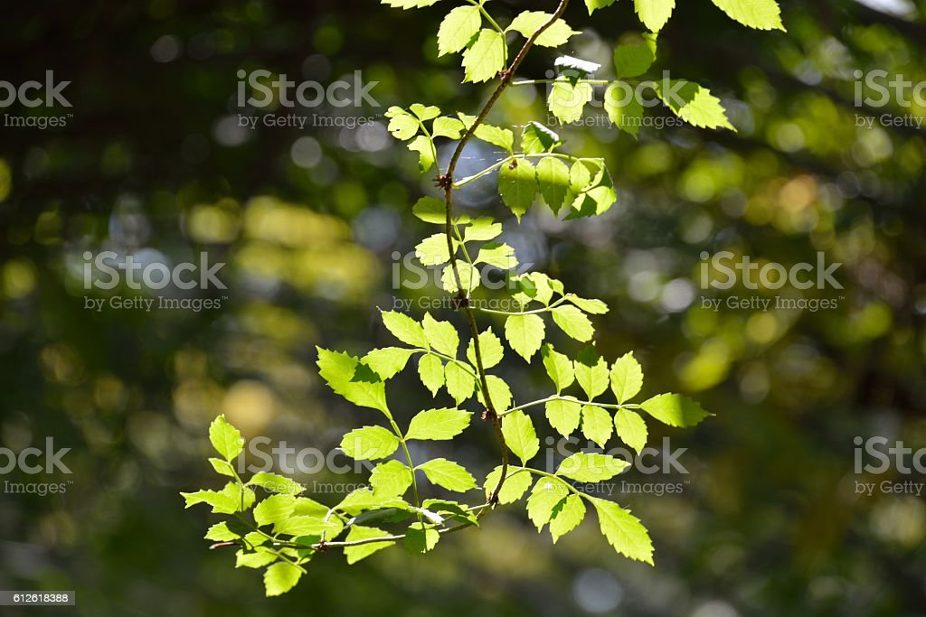 Backlight on the leaves stock photo