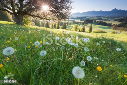 istock backlight view through apple tree, summer meadow in bavaria, germany 166182594