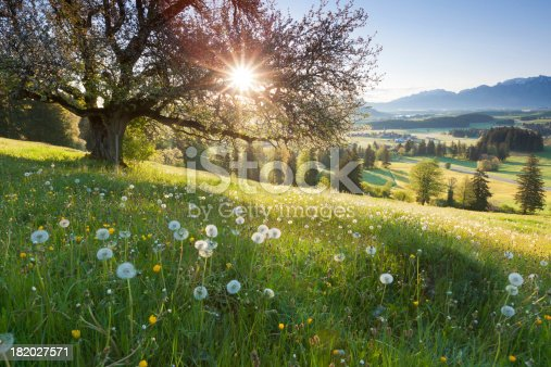 istock backlight view through apple tree, summer meadow in bavaria, germany 182027571