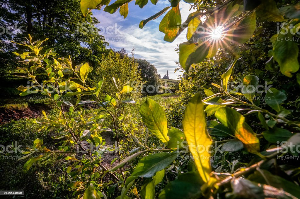 Backlighted stock photo