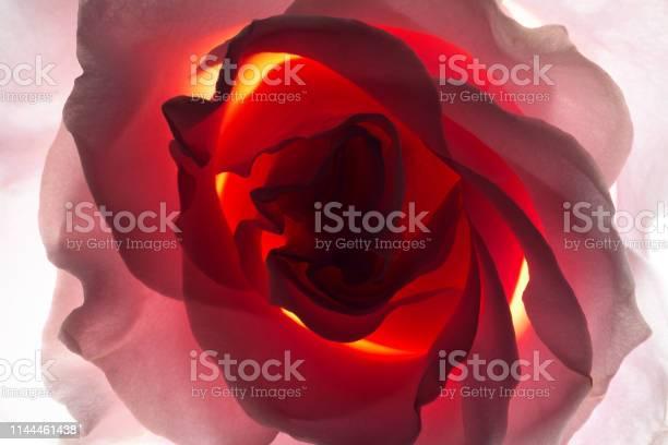 Backlit flower picture id1144461438?b=1&k=6&m=1144461438&s=612x612&h=p lwcmtkwxje4sbpyjibkzgfcroihv6ibjs9mvlavrq=