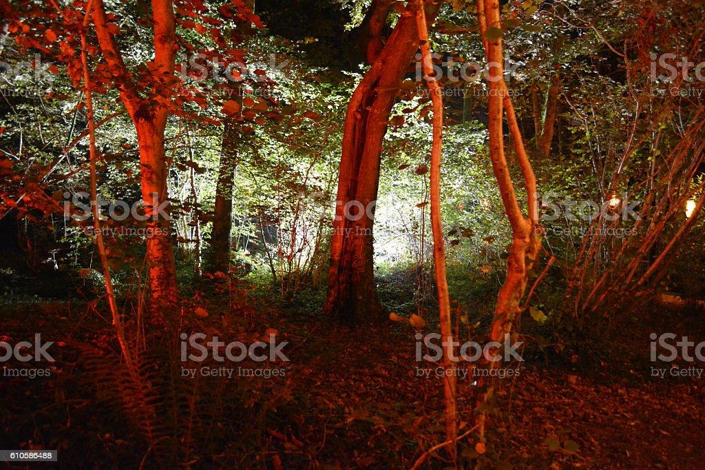 Backlit Forest at Night - foto de acervo