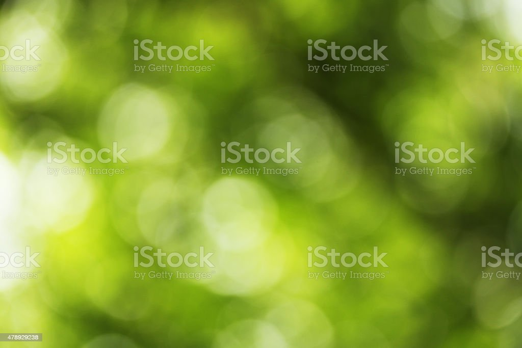Backlit green leaves of trees - defocused background stock photo