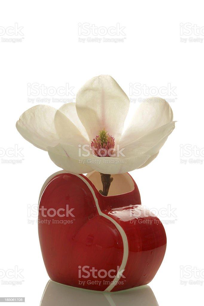 Backlit magnolia in heart vase royalty-free stock photo