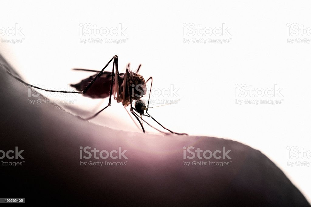 Backlit Mosquito royalty-free stock photo