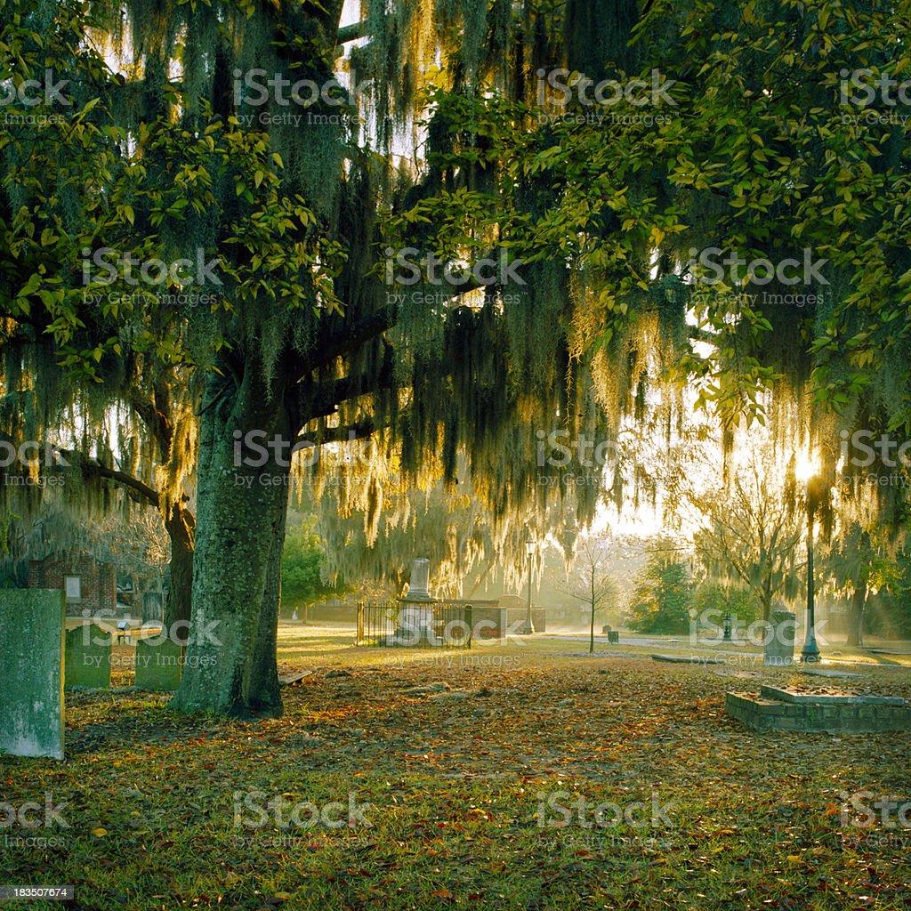 Backlit Moss and Trees, Savannah, Georgia royalty-free stock photo