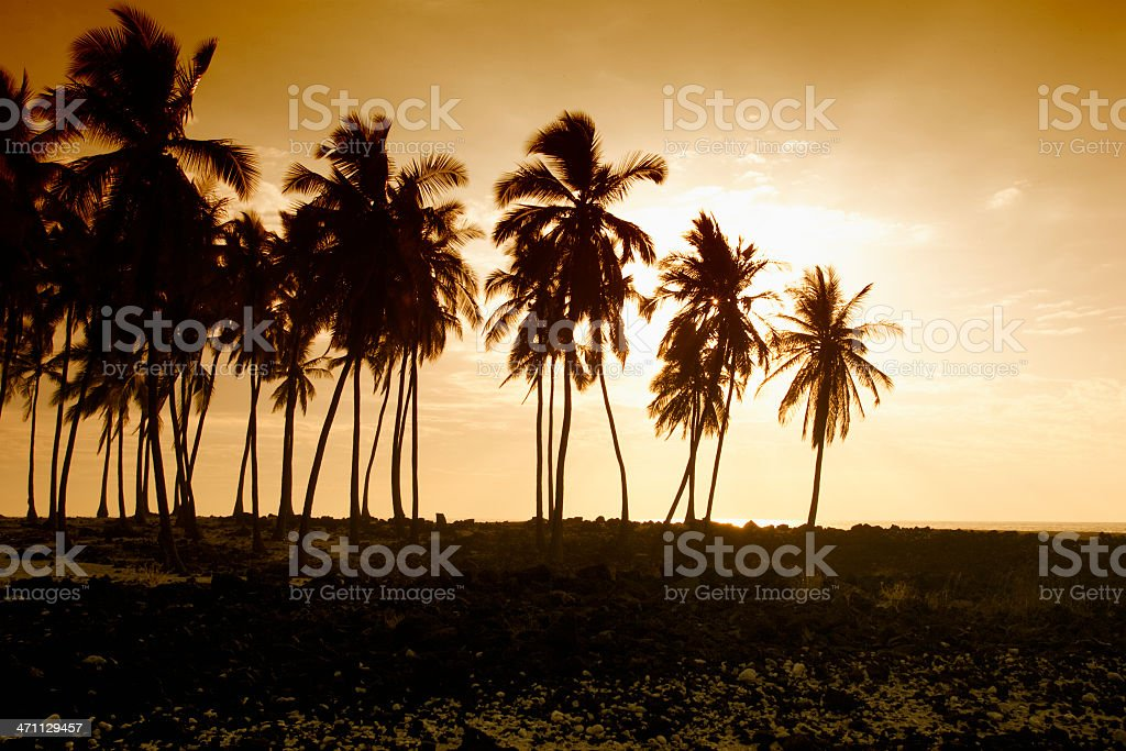 Backlit Palm Tree Stand, Tropical Island Paradise, Warm-Toned Image, Copyspace royalty-free stock photo