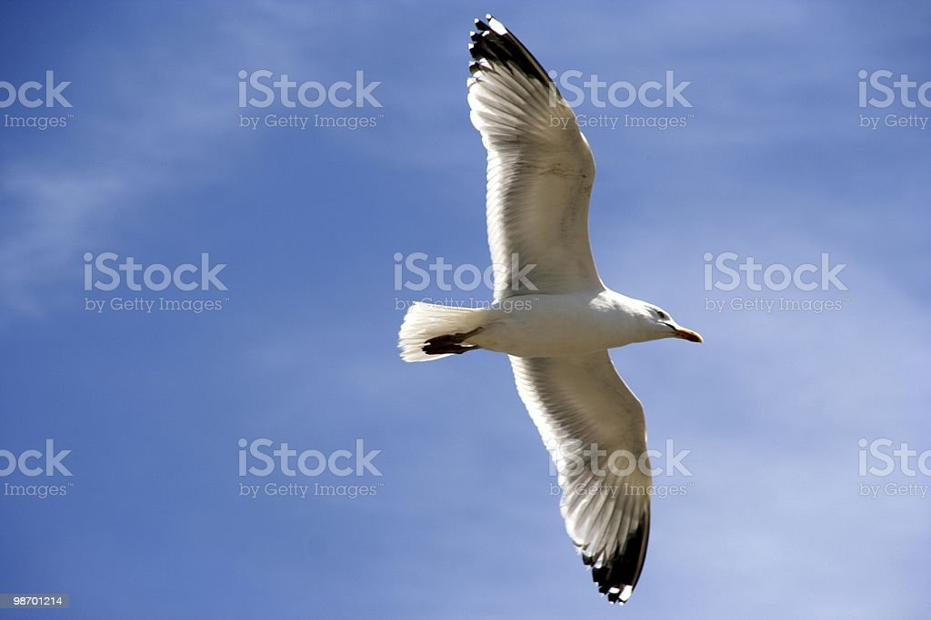 Backlit seagull royalty-free stock photo