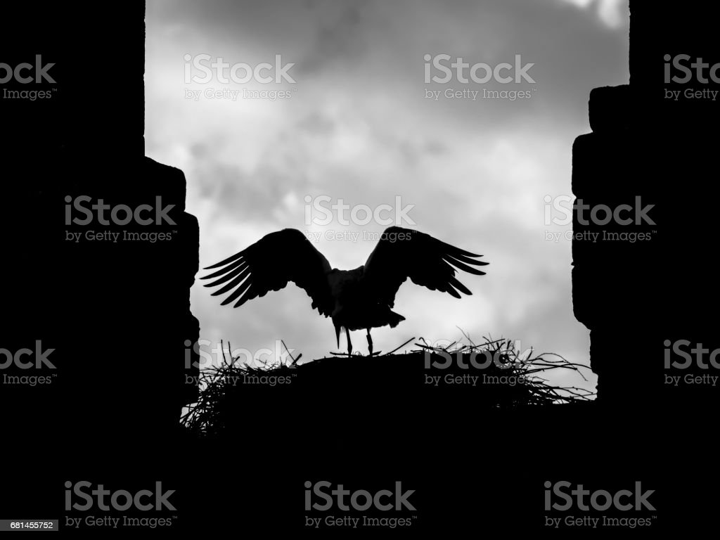 Backlit silhouette of a stork (Ciconia ciconia) opening its wings in its nest on a bell tower royalty-free stock photo