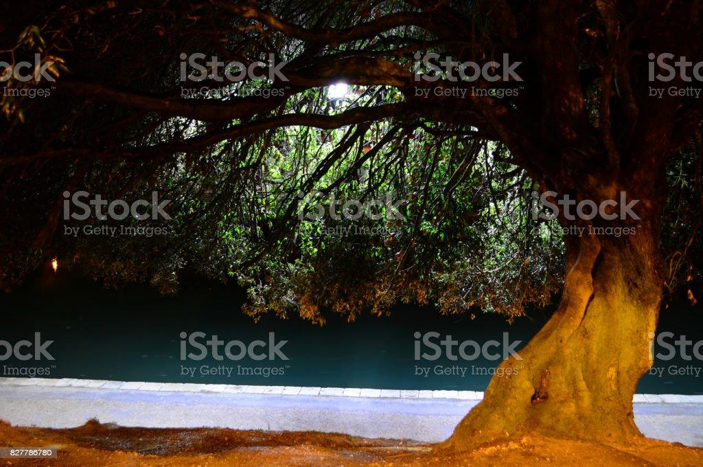 Backlit Tree Over Lake stock photo