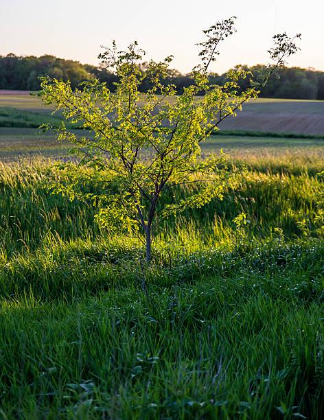Backlit tree stock photo