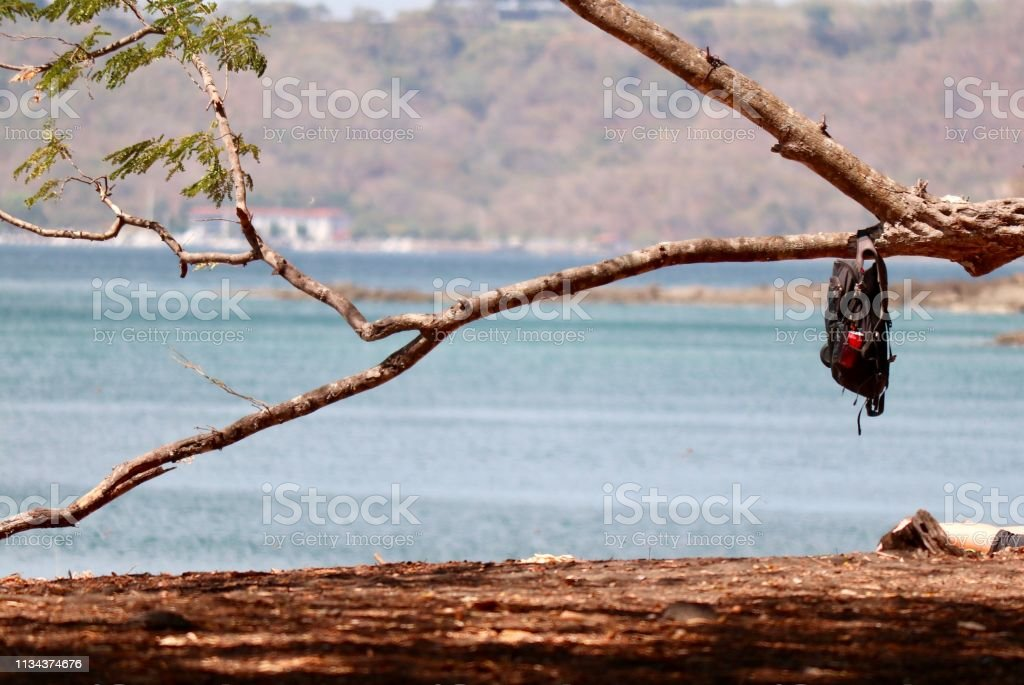 Backpack on a tree branch stock photo