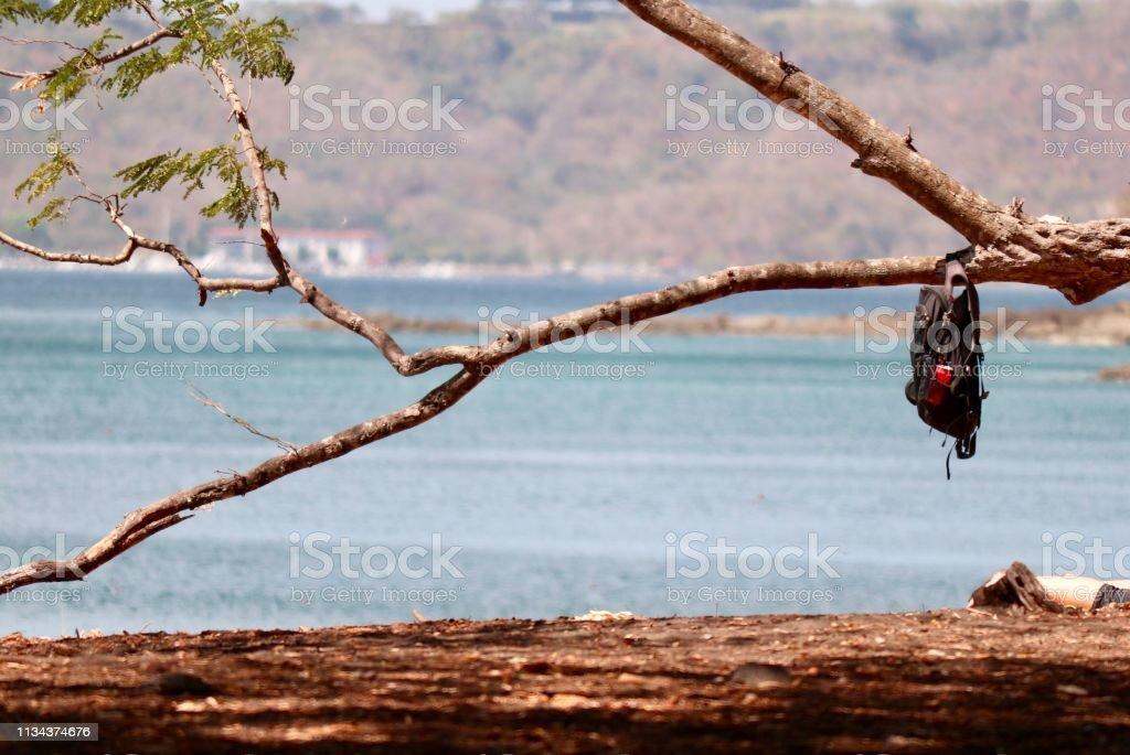 Sac à dos sur une branche d'arbre - Photo