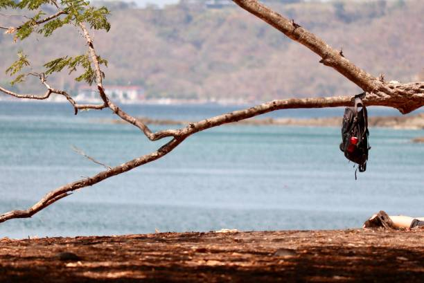 sac à dos sur une branche d'arbre - josianne toubeix photos et images de collection