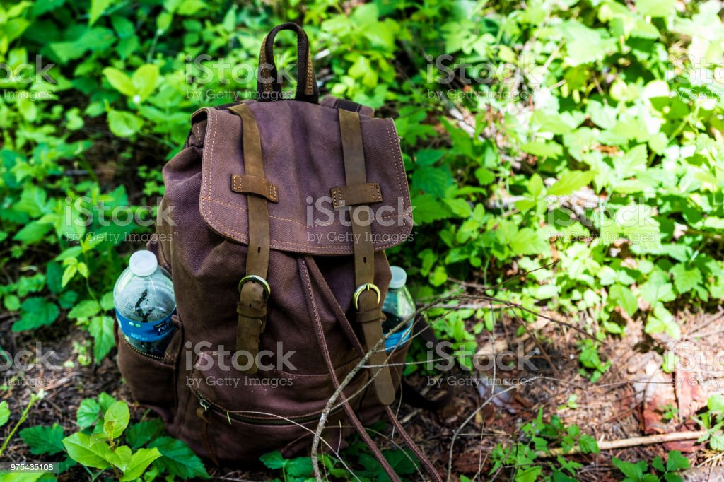 Backpack on lush green forest floor with plants and twigs stock photo
