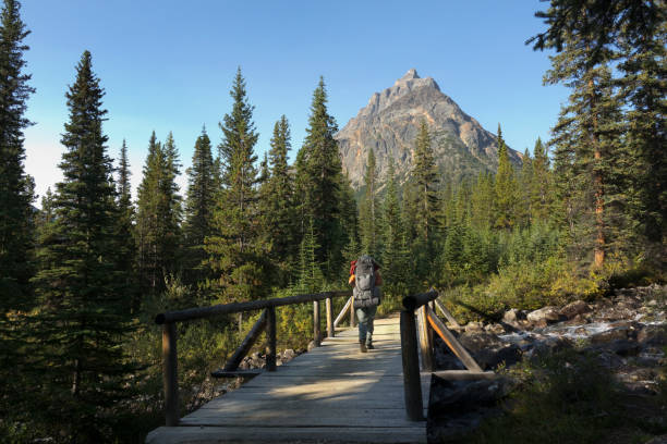 With my loaded backpack, I cross the Circus Creek bridge on the Portal Creek Trail with Mount Peveril rising in the distance.