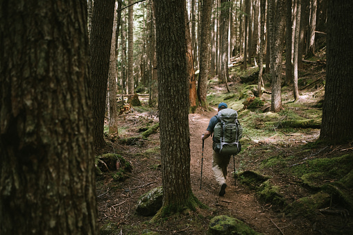 A lone mature adult hiker hikes through the woods headed in to the mountains. Shot in Washington state on the Olympic Peninsula.