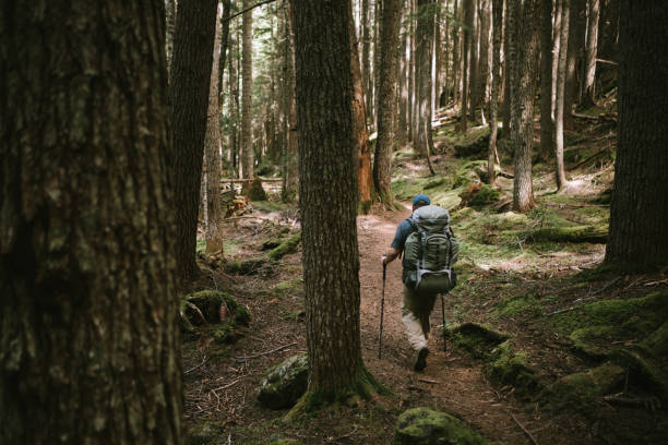 Backpacker Hiking Thick Forest on Olympic Peninsula