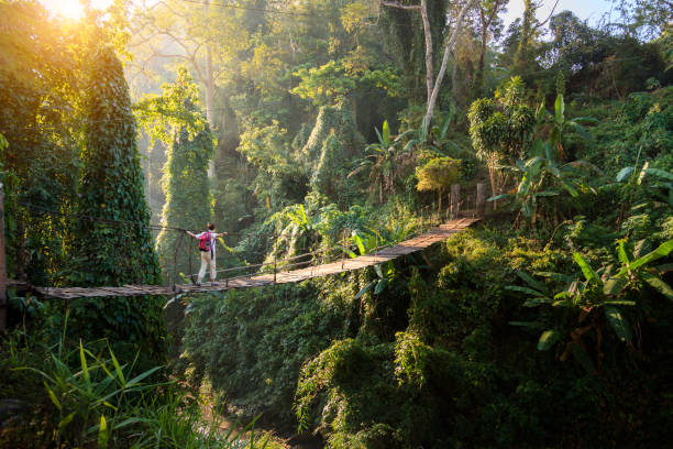 Backpacker on suspension bridge in rainforest stock photo