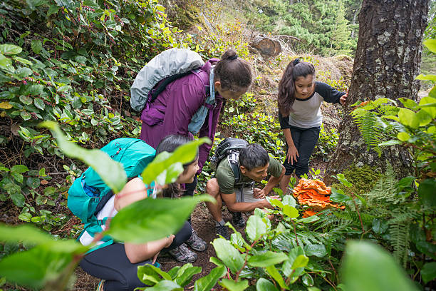 backpackers examine an edible orange mushroom while hiking through forest - sustainable travel stockfoto's en -beelden