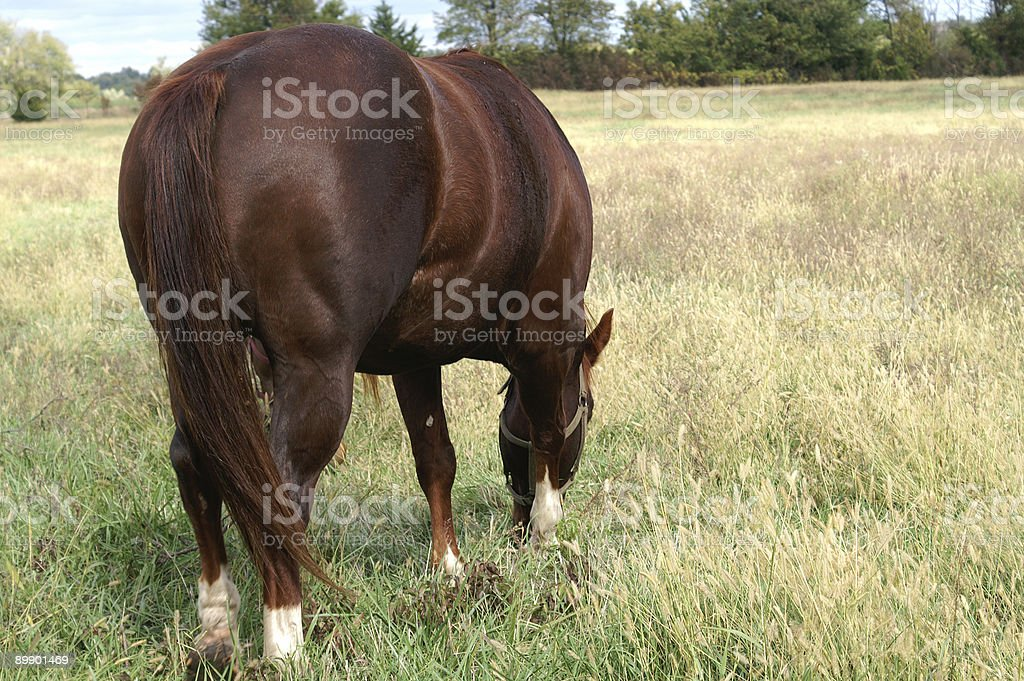 Backside of horse royalty-free stock photo