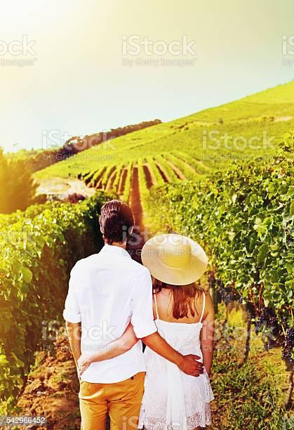 Backview of young couple walking through beautiful, sunny  vineyard